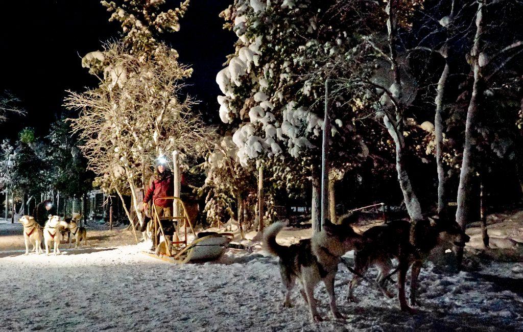 The huskies eagerly waiting to start running.